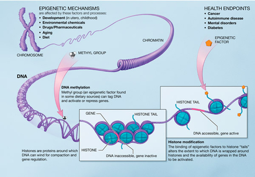 DNA-metahylation