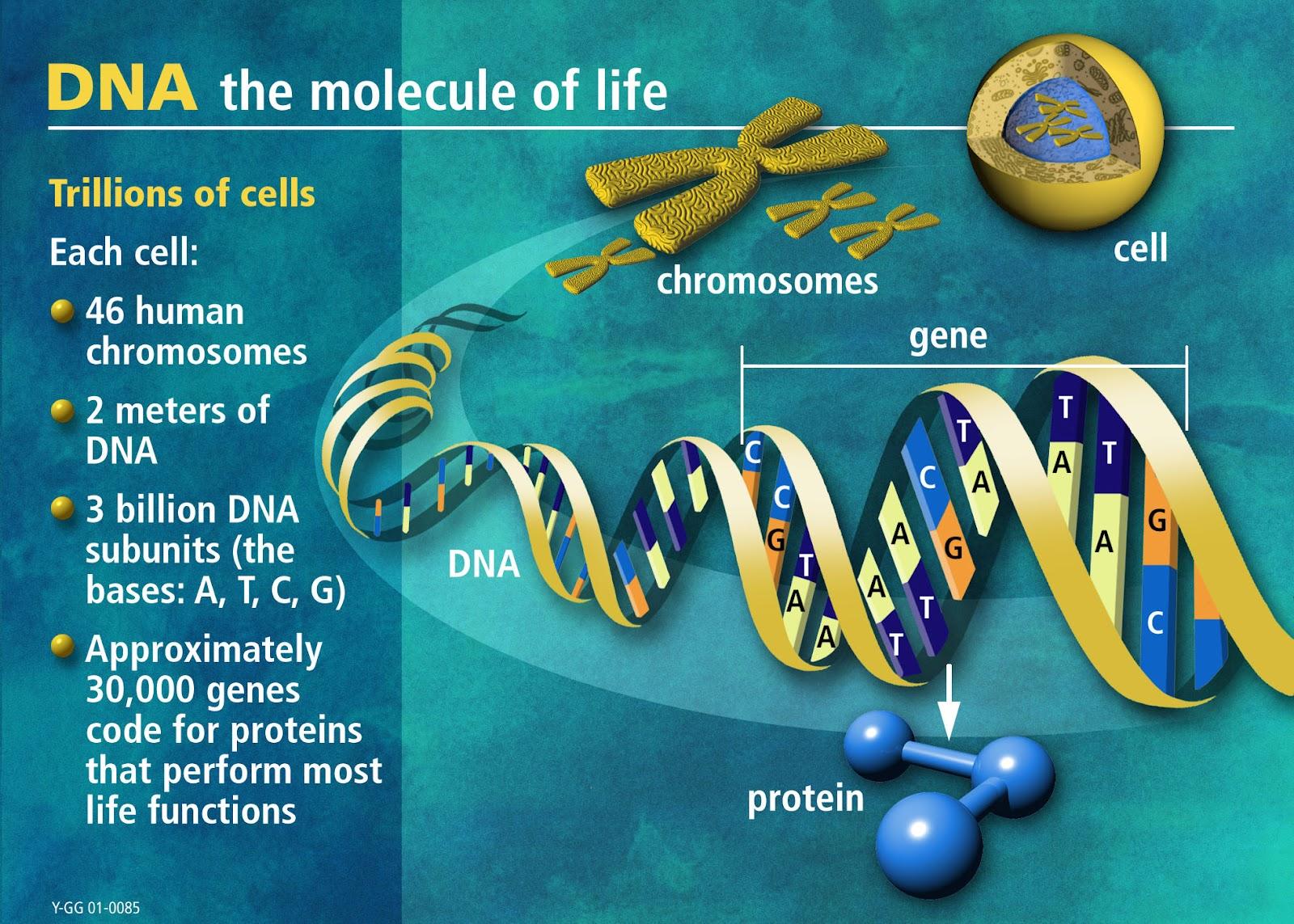 livets molekyl
