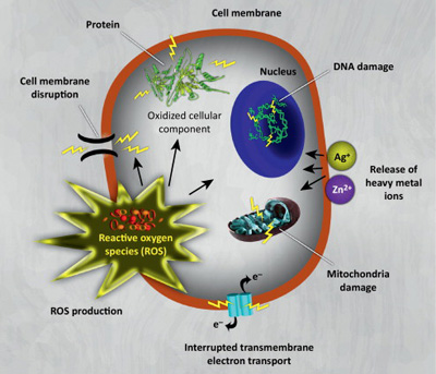 oksygen-fare-for-celle