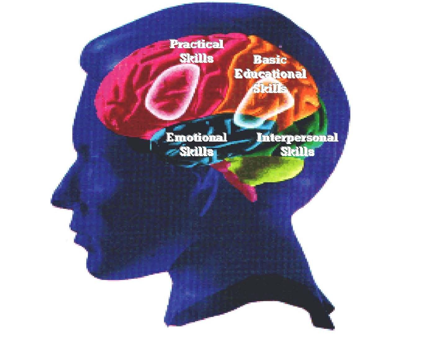 funksjonsområder i hjerne