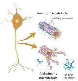 mikrotubules