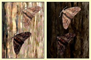nattsommerfugler